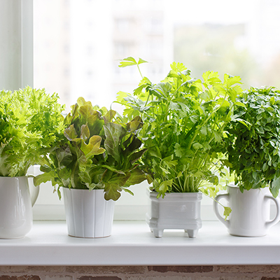 How to Use Your Herb Garden Every Day