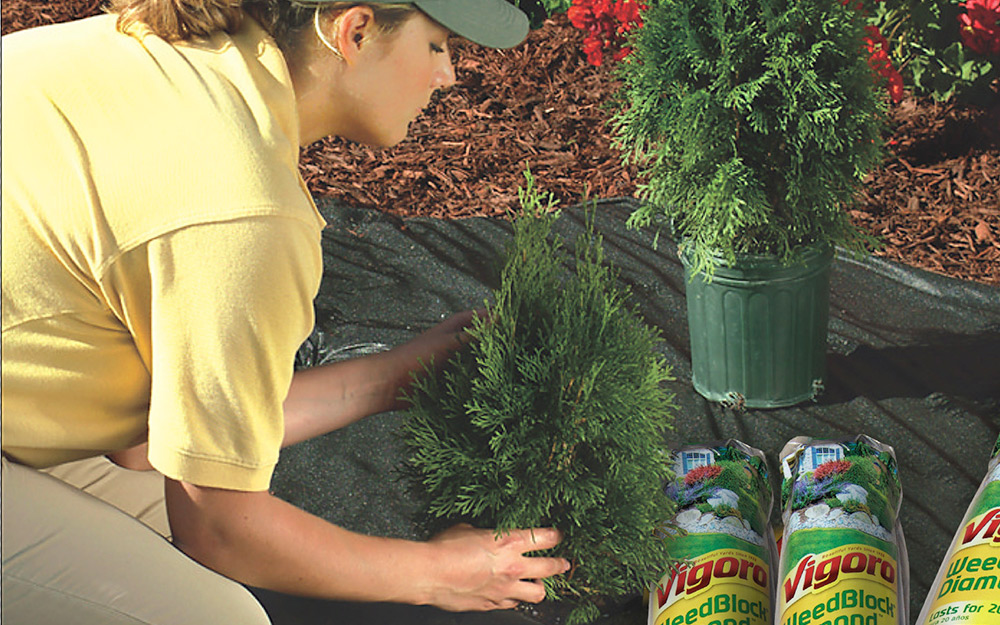 woman using Vigoro landscape fabric to plants shrubs