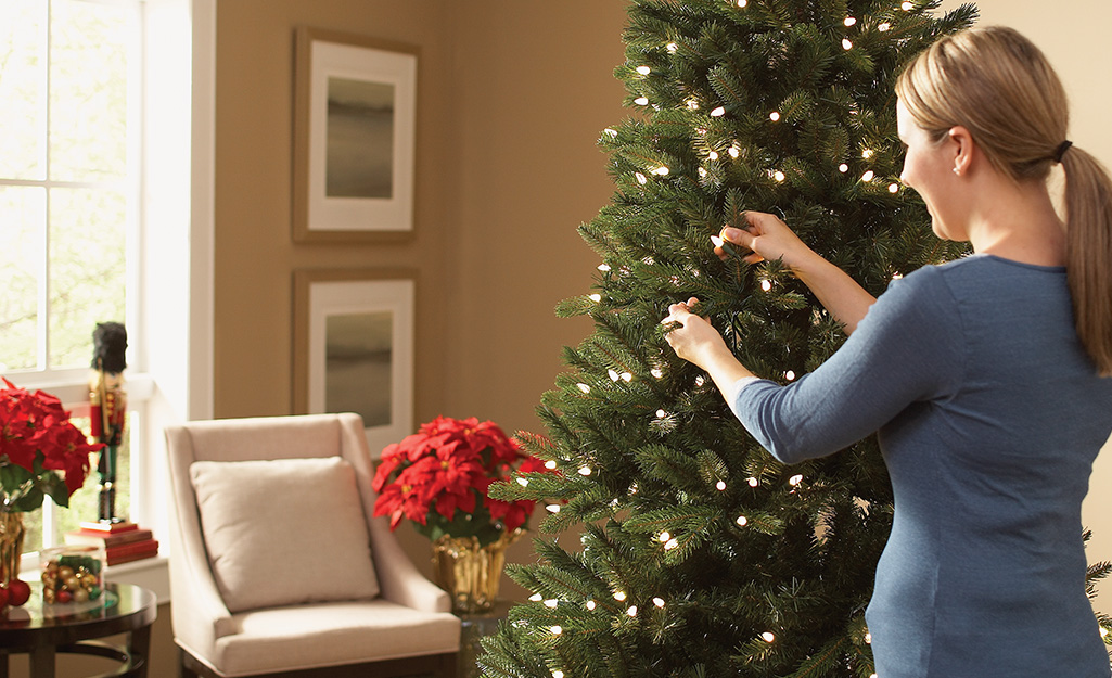 How to Water a Christmas Tree - The