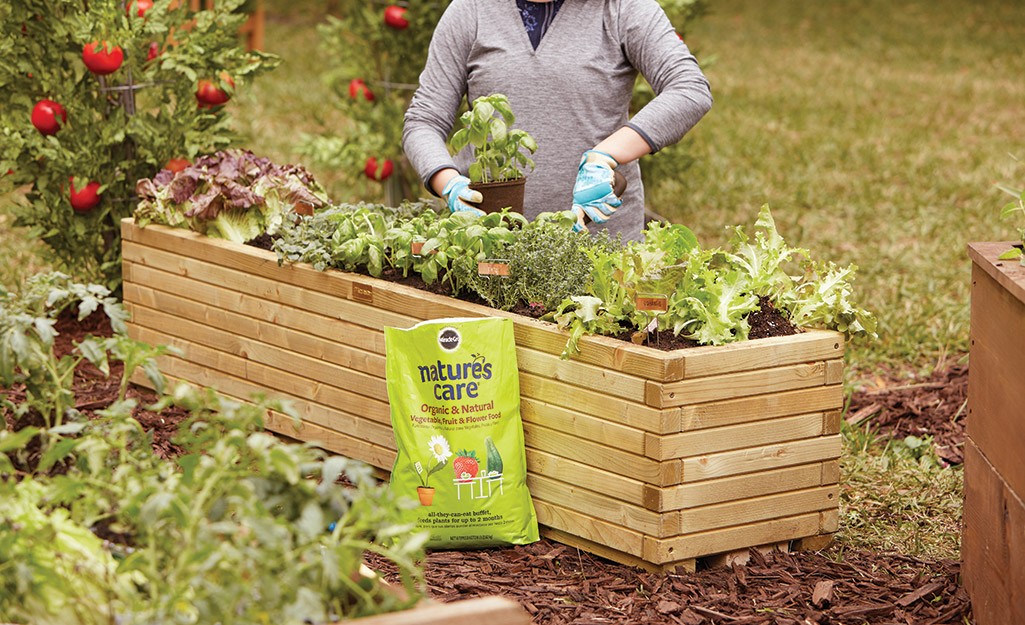 Planting vegetables in a raised garden bed