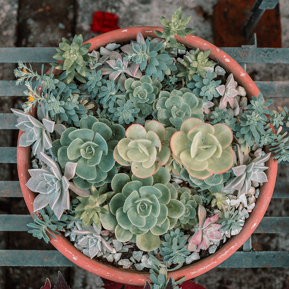 How to Identify and Fix Common Problems with Succulents