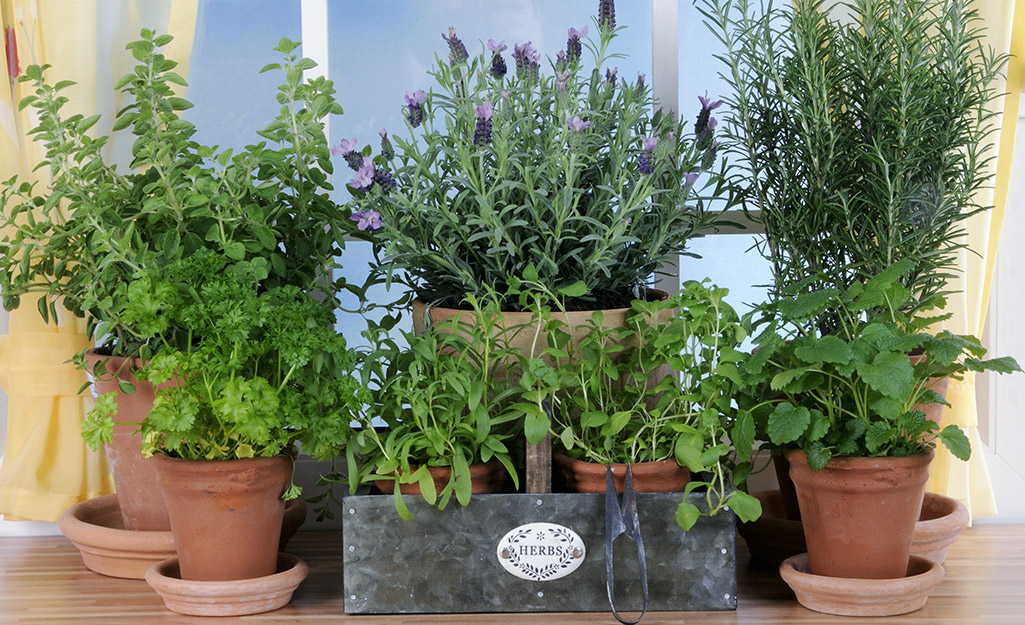 Containers of herbs in a sunny window