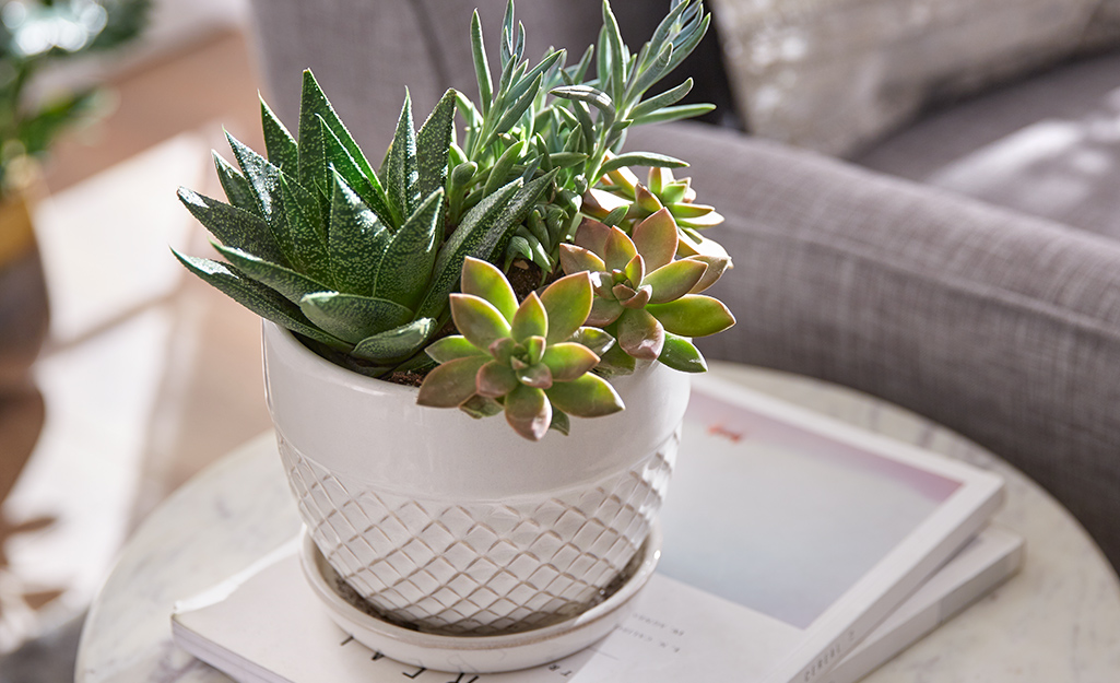 Succulents potted in a white pot on a side table.