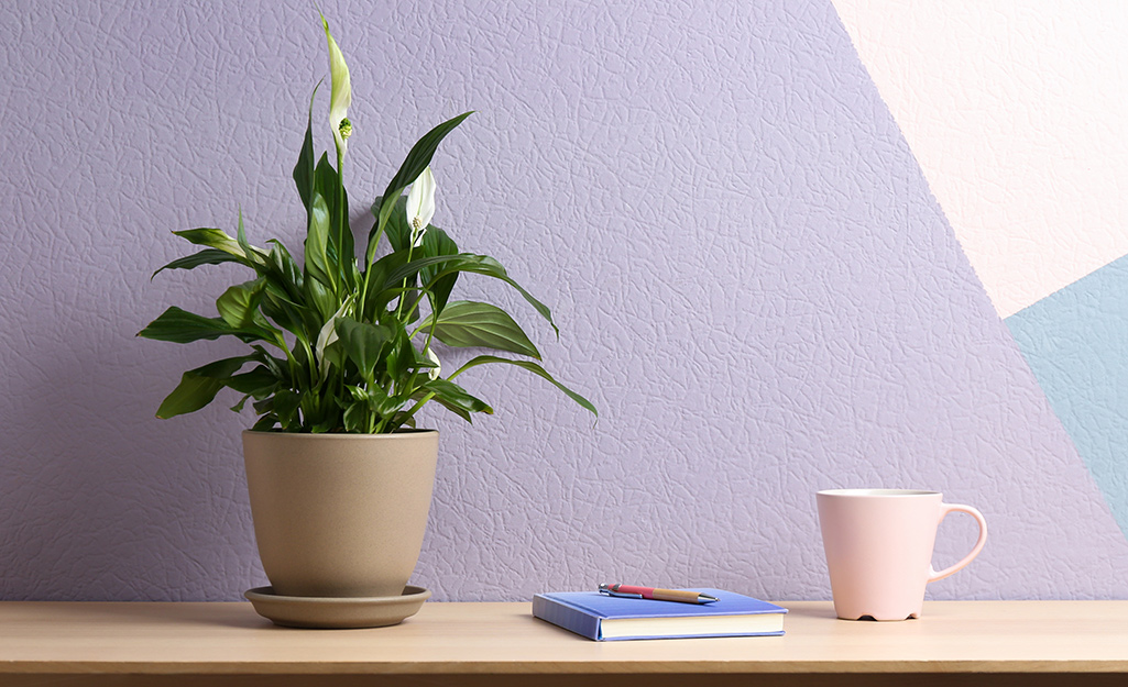 A potted peace lily sits on an at-home office desk.