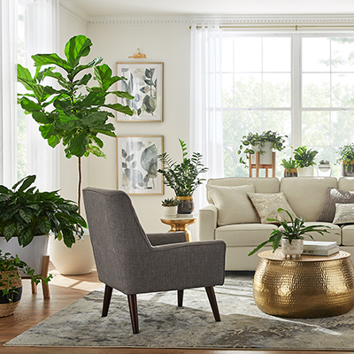 A living room with a variety of indoor plants.