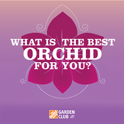Infographic: What Is the Best Orchid for You?