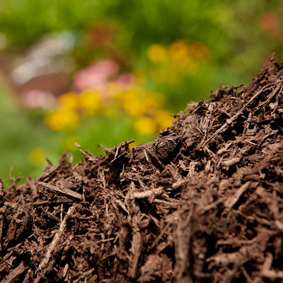 Insulate Your Garden With a Layer of Mulch