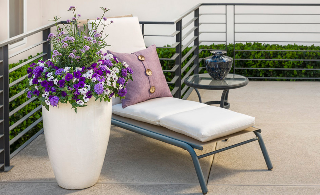Purple blooms in a white container on a patio