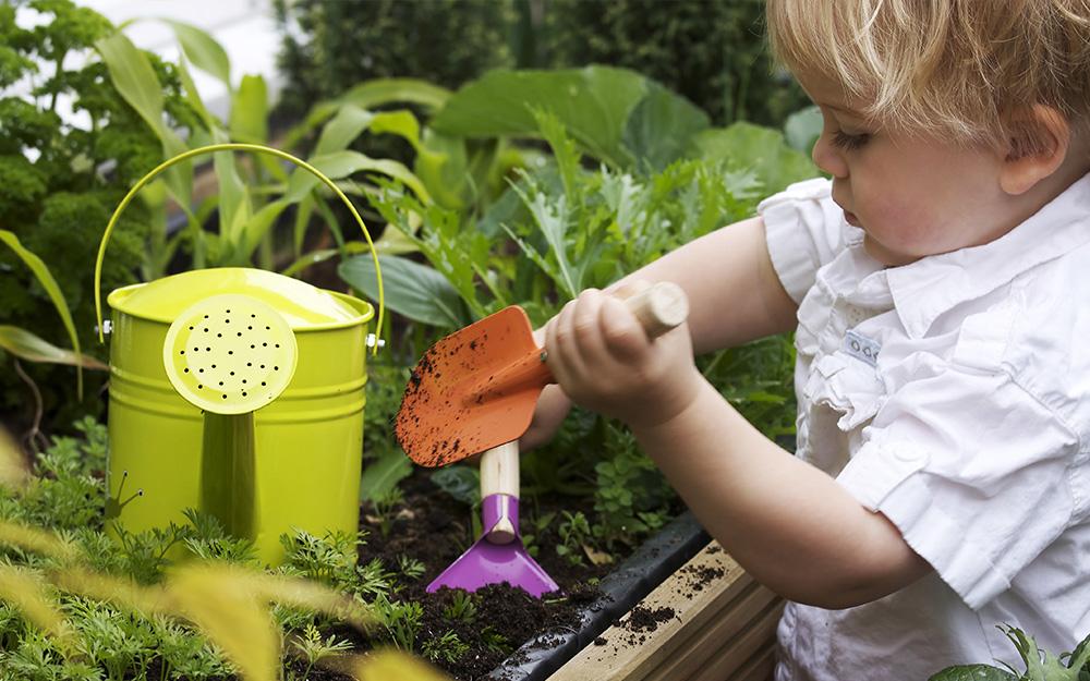 Một đứa trẻ đang đào bới trong vườn với một cái xẻng và cái cuốc cỡ trẻ con, với một cái bình tưới nhỏ gần đó
