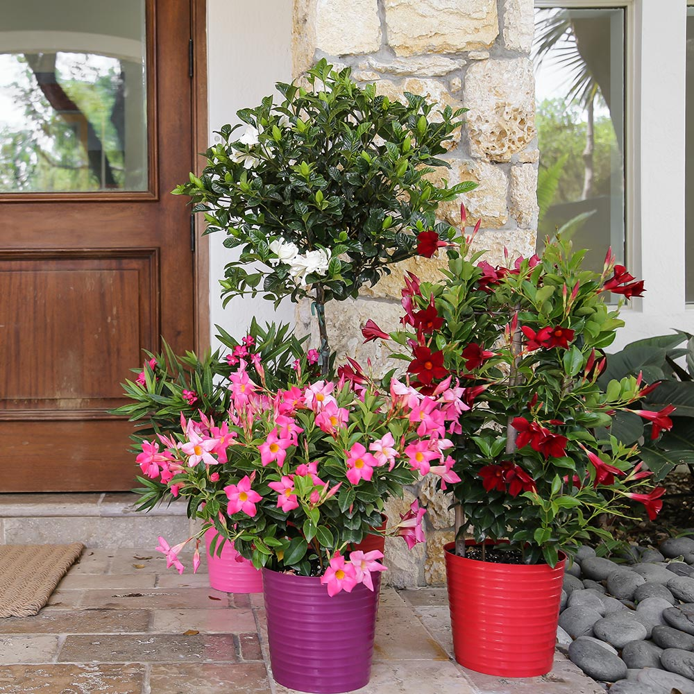 Pink and red flowers in containers by front door