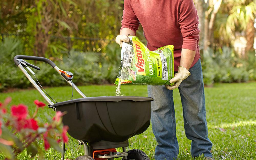 Man using a push spreader  to fertilize a lawn.