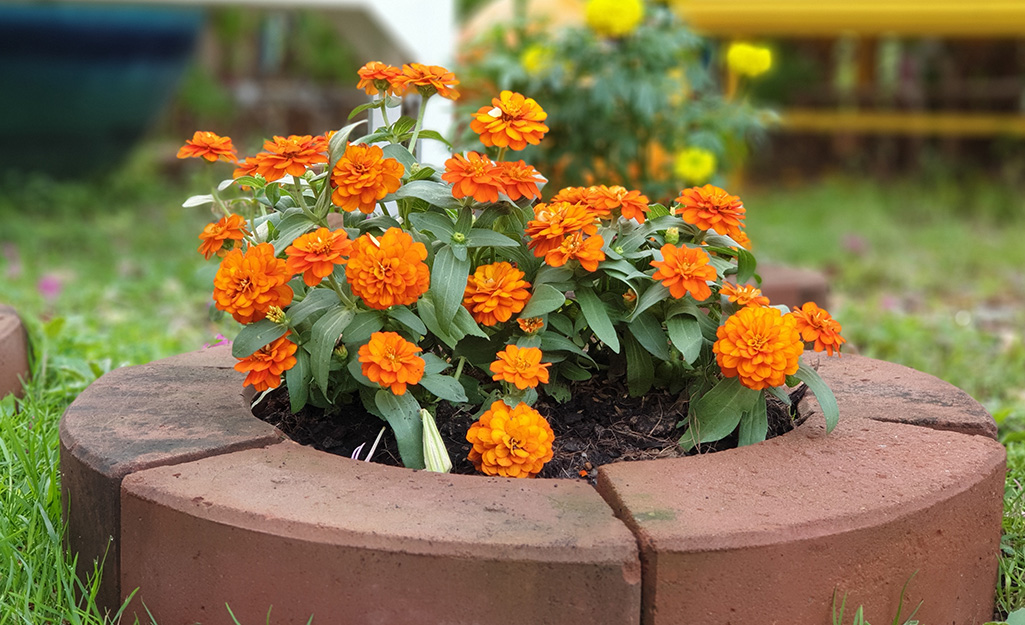 Marigolds in a mailbox garden