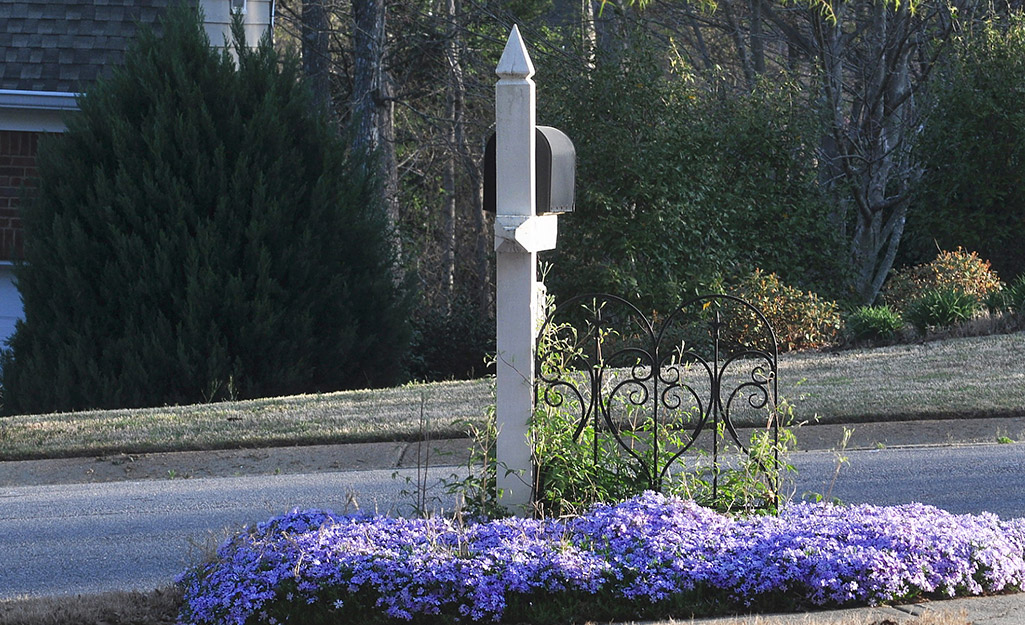 Purple flowers by a mailbox