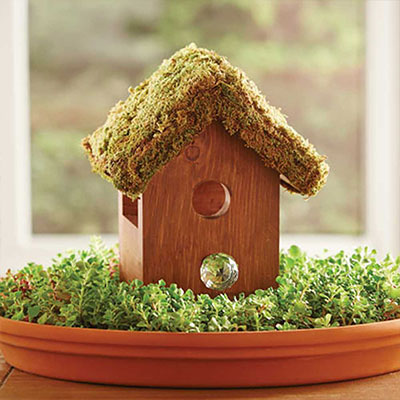 Make a Birdhouse Centerpiece in a Nest of Succulents