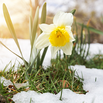Make Inspiring Resolutions for the New Gardening Year