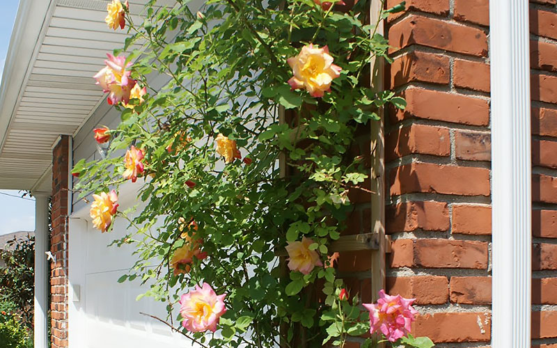 Small Rose Garden Ideas The Home Depot