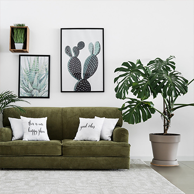 A large, potted Monstera plant beside a sofa in a living room decorated with botanical wall art.