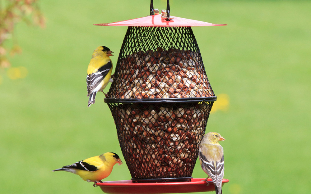 Birds sitting on a bird feeder filled with seeds.