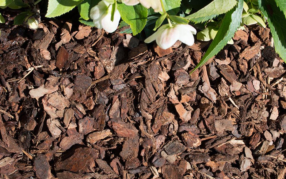 image of pine mini nugget mulch