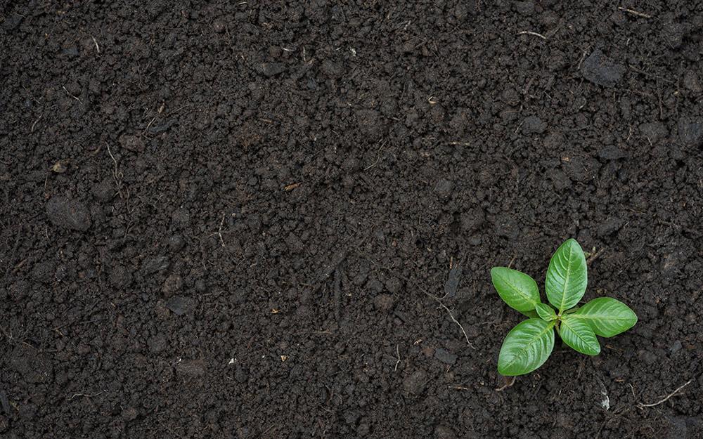 image of topsoil