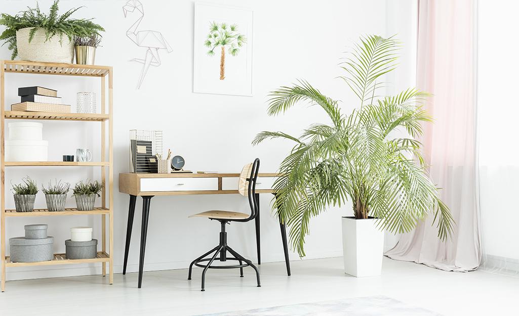 Không gian văn phòng mở với cây xanh trên giá sách và chậu cây lớn màu trắng