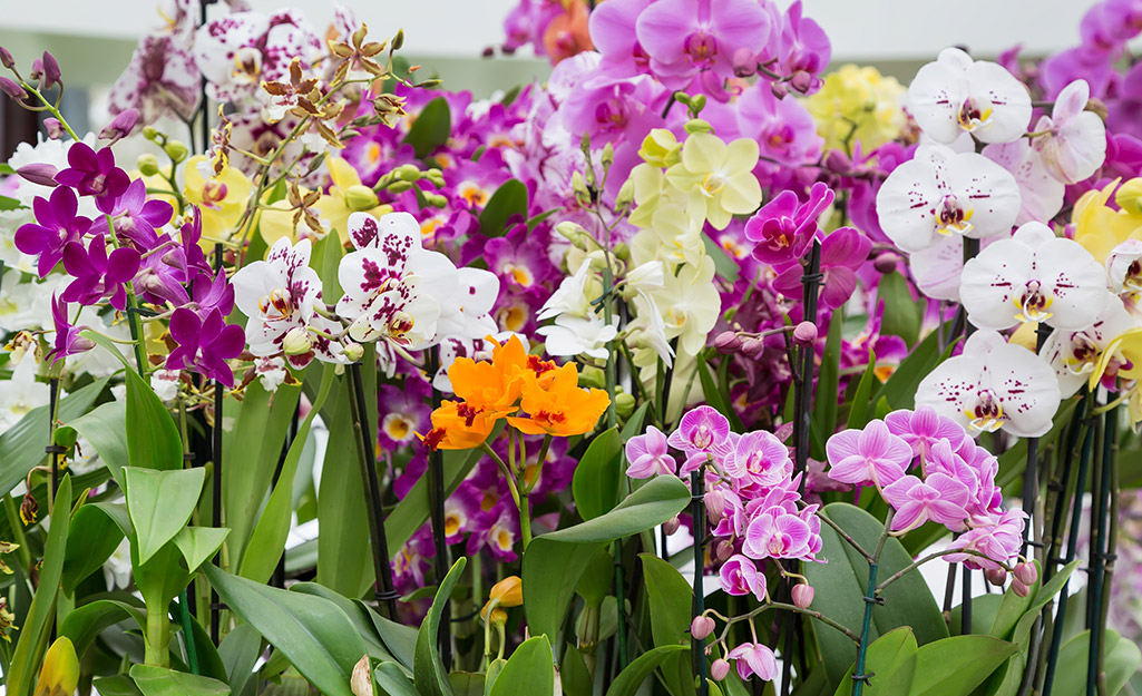 A variety of orchid plants in blooms of pink, white and orange colors.