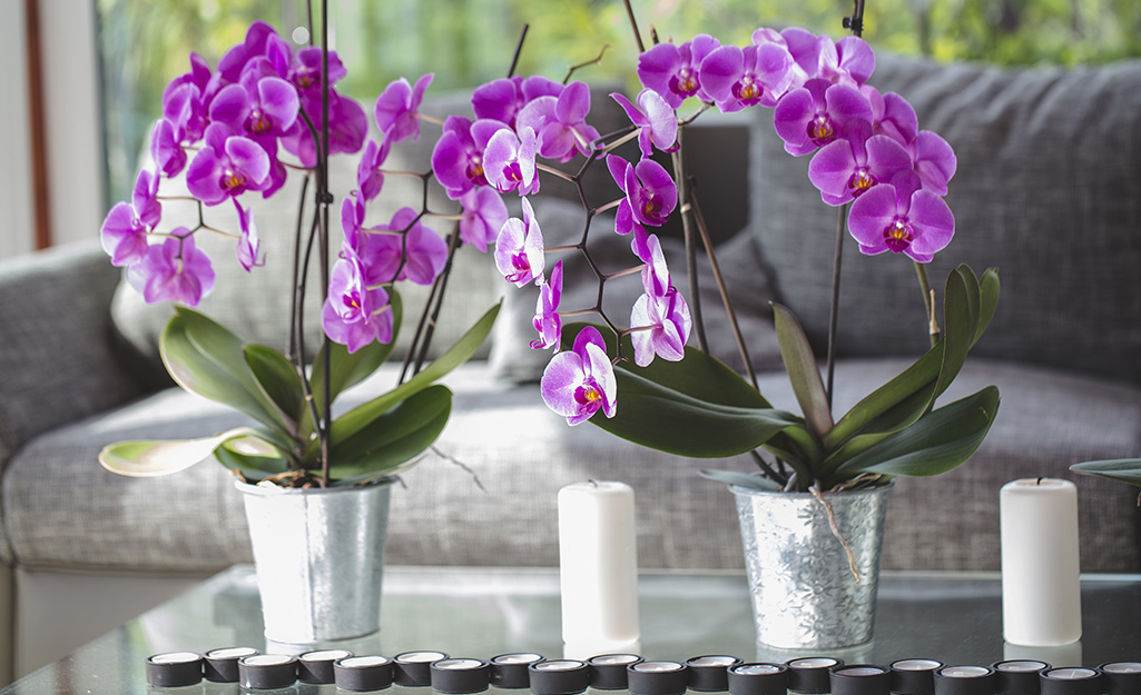 2 purple orchids in decorative containers on a table top in a room.