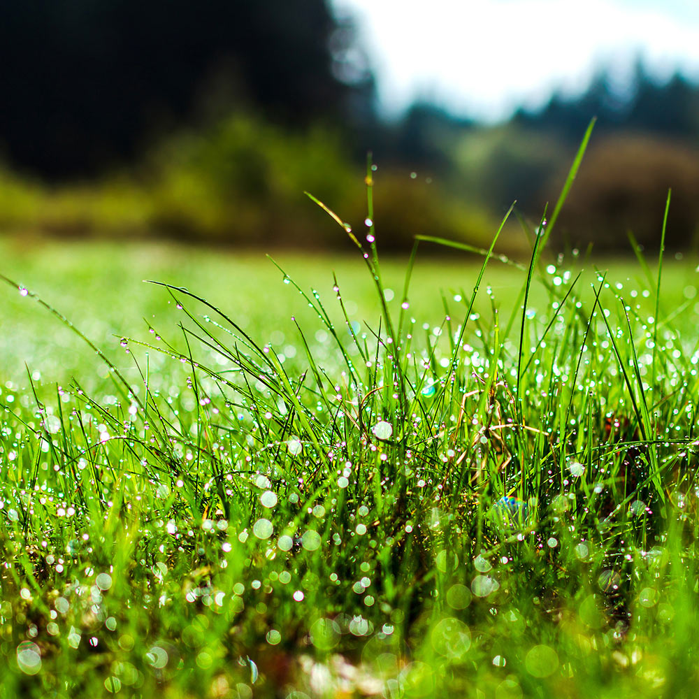 Top 5 Questions about Lawn Care