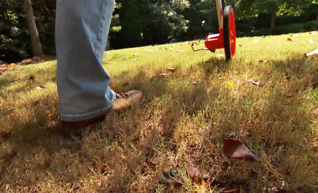 Overseeding A Lawn The Home Depot