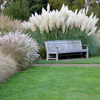 Perennial Ornamental Grasses to Plant This Fall