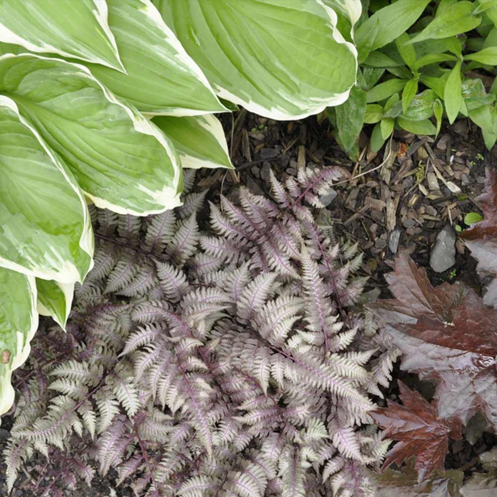 Perfect Companion Plants for Hosta - The Home Depot on ideas for indian republic day, ideas for front of house garden, ideas for front of house landscaping with pavers, ideas for landscaping close to house, ideas for office plant, fake trees decorate room in house plant, ideas with privacy bushes, ideas for making flower beds, ideas for yard landscape with trees, ideas for garden paths walkways, ideas for front of lawn, master bedroom decorating ideas for plant, front door potted plant, philodendron house plant, front yard decor plant, ideas to put around your pool, modern house interior indoor plant, ideas for interior plants, ideas for landscaping in front of house,