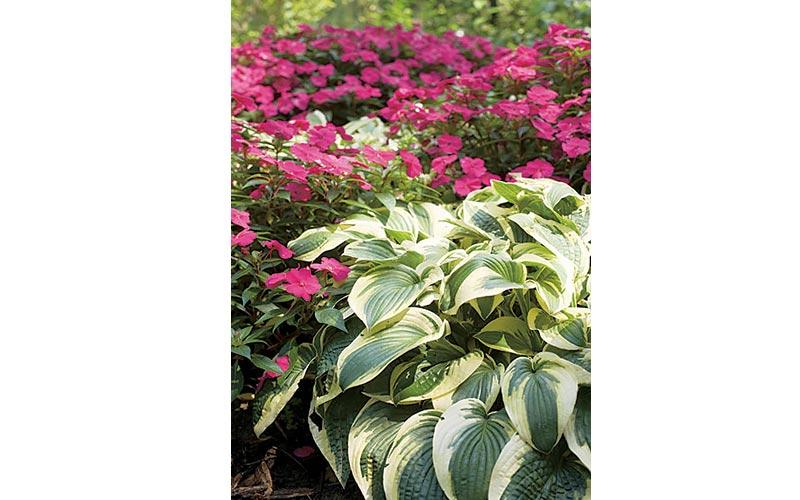 More Hosta Companion Plants