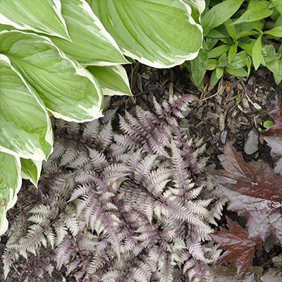 Perfect Companion Plants for Hosta