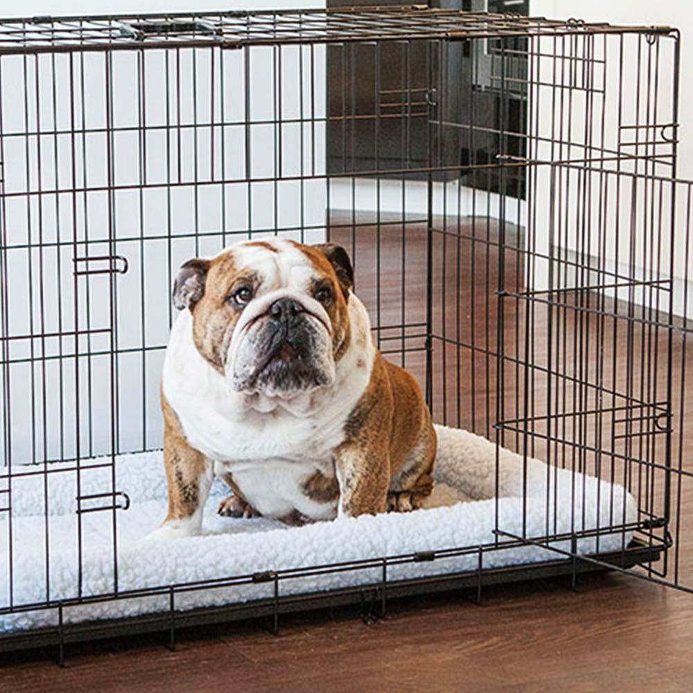 Pet Containment Systems and Training Tools Buying Guide