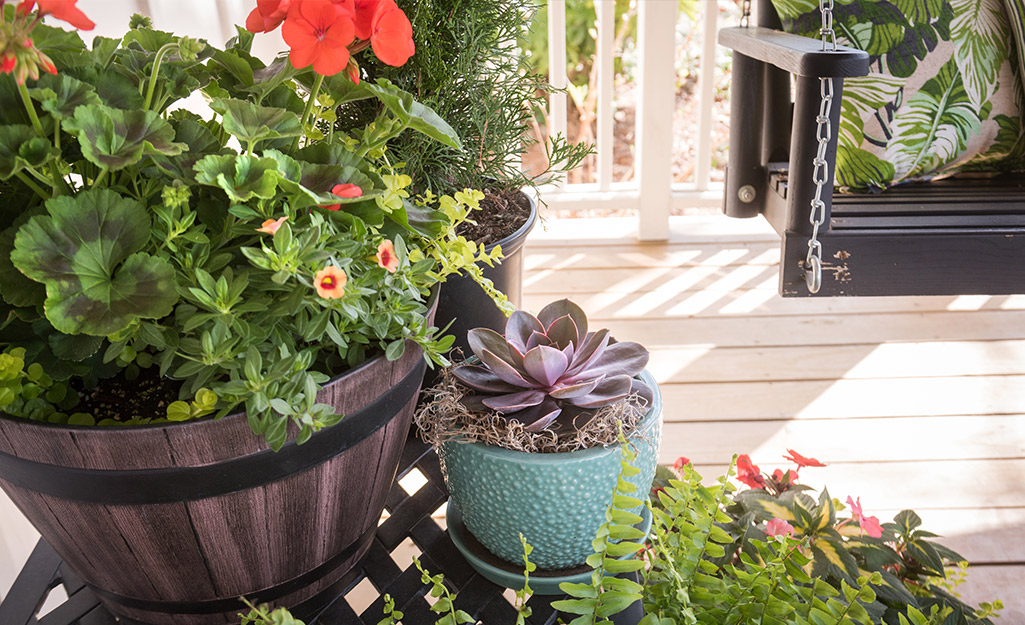 Potted plants on a porch next to a porch swing.