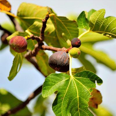 Plan Now, Pick Fresh Fruit Later