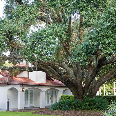 How to Plant Hurricane-Resistant Trees