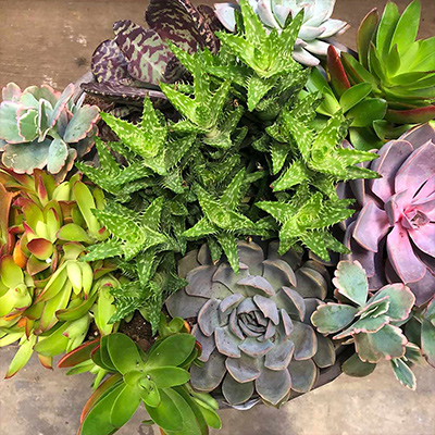 Plant Drought Smart Succulents Now