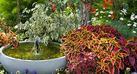 Plants for a fountain garden