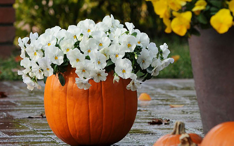 More Ideas for Fall Front Porch Decor