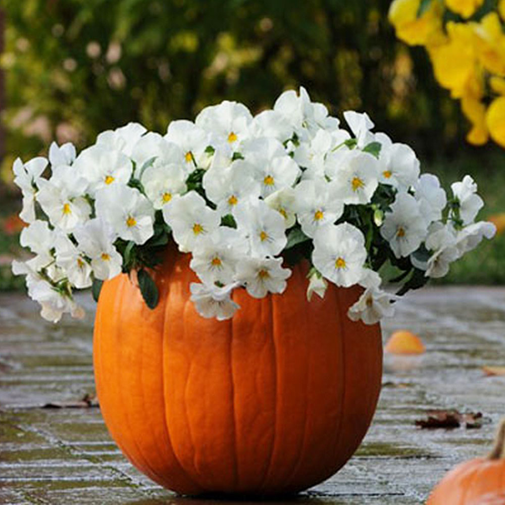Plant Pansies in Pumpkins and More Ideas for Porch Decor