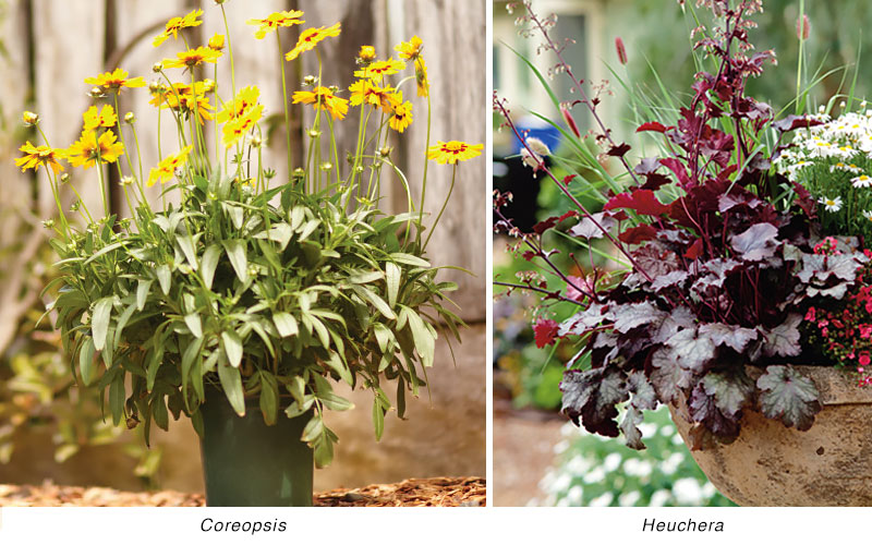 Perennials for a Southern Garden
