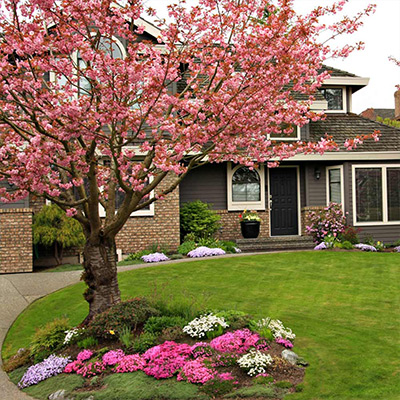 Spring Flowering Trees and Shrubs to Plant Now