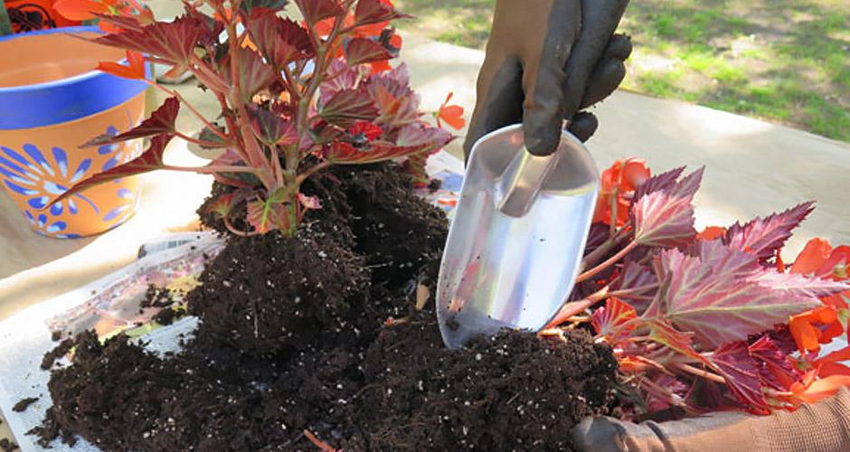 Begin Planting