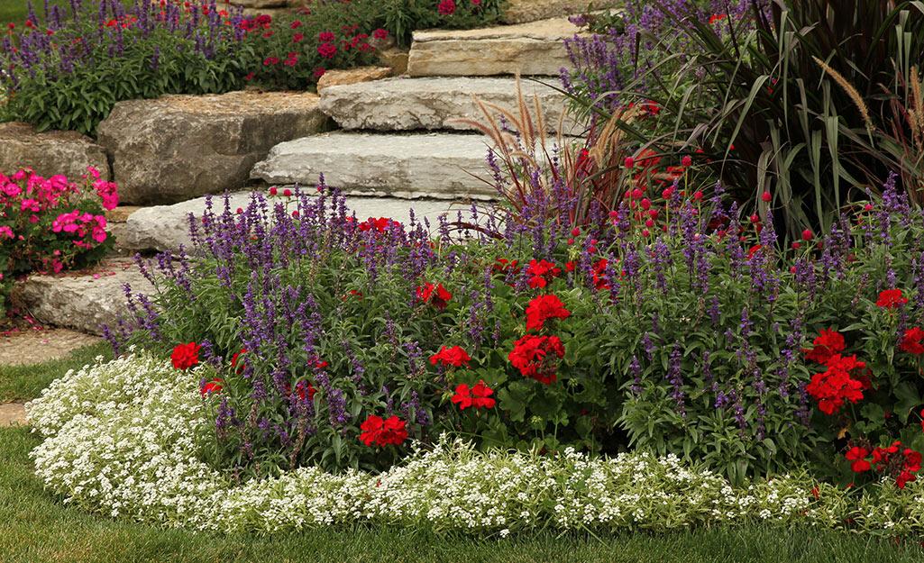Salvia in a summer flower border