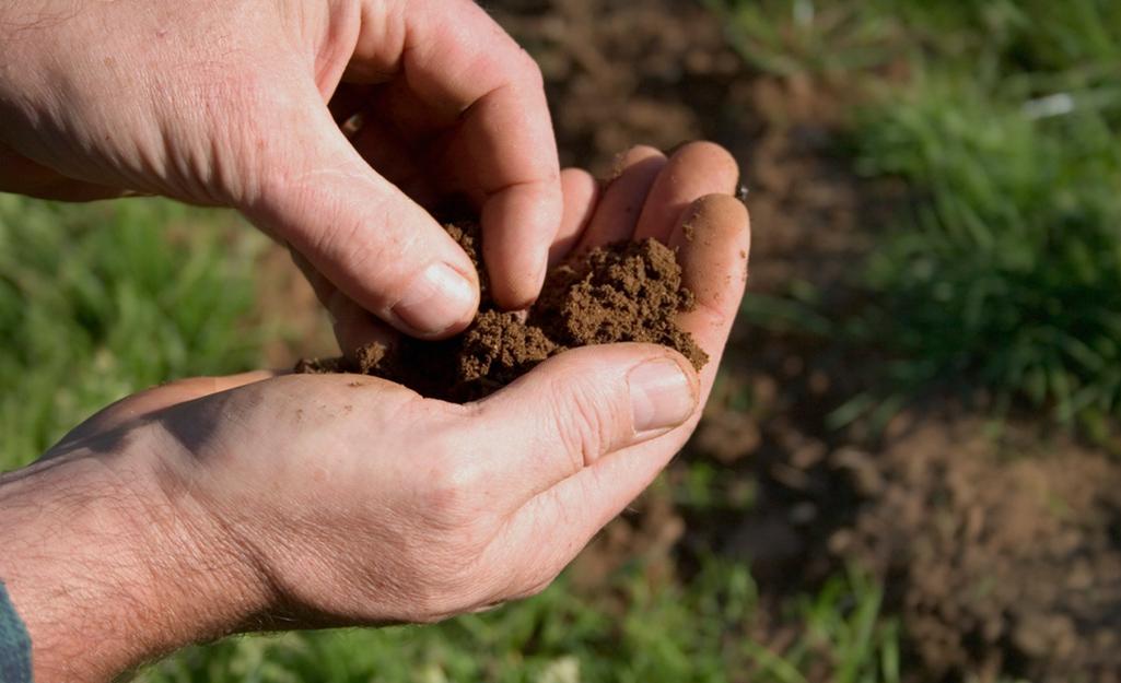 Prepare Soil for Your Edibles Garden