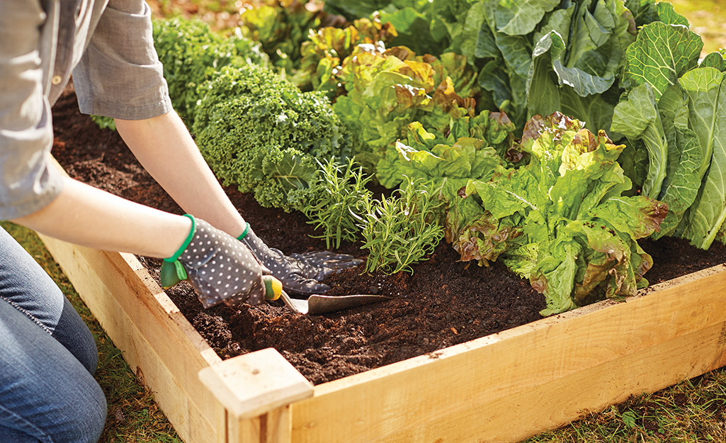 Know When to Sow and Plant Your Edibles Garden