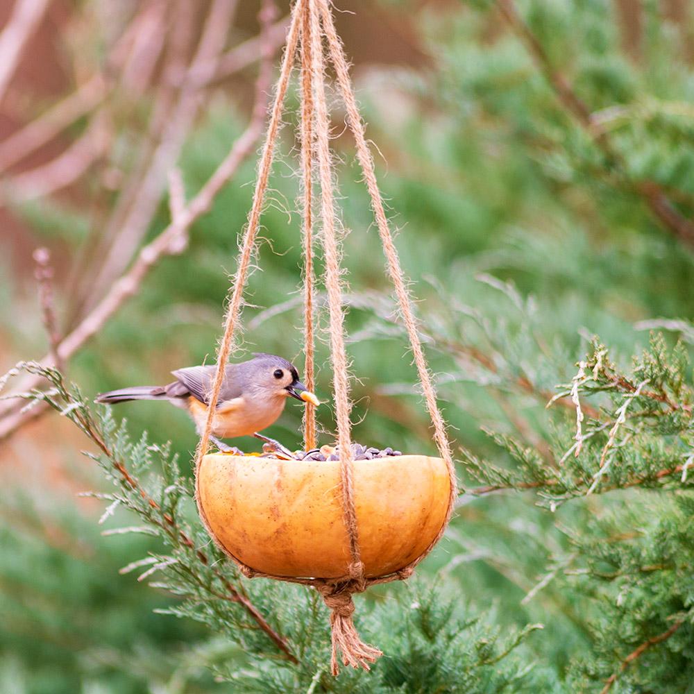 Pumpkin Bird Feeder The Home Depot