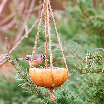 A bird sitting on a pumpkin bird feeder.