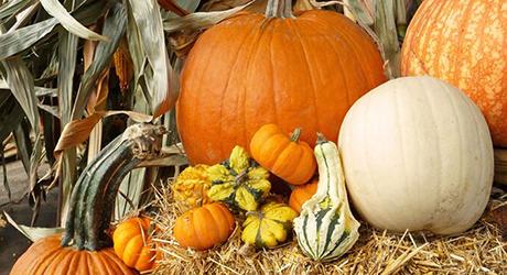 Celebrate harvest - Pumpkin Decorating Tips